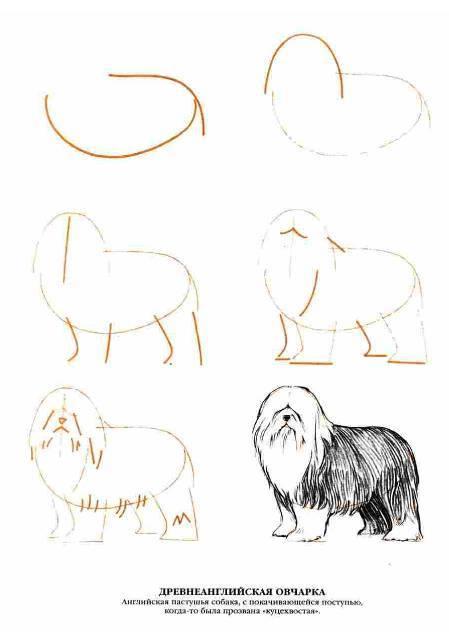 Иллюстрация 1 из 13 для Рисуем 50 собак - Ли Эймис | Лабиринт - книги. Источник: Ценитель классики