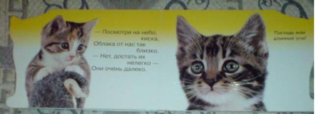 Иллюстрация 1 из 5 для Про котят (Погладь меня) | Лабиринт - книги. Источник: Lisa82