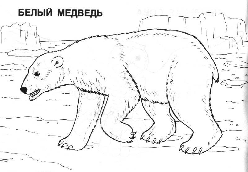 Иллюстрация 1 из 5 для Мир животных: Арктика (раскраска) | Лабиринт - книги. Источник: OOlga