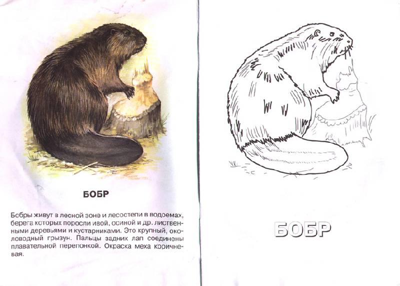 Иллюстрация 1 из 2 для Виноградная улитка. Живой мир Европы | Лабиринт - книги. Источник: OOlga