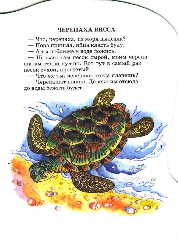 Иллюстрация 1 из 3 для В теплом море - Святослав Сахарнов | Лабиринт - книги. Источник: OOlga