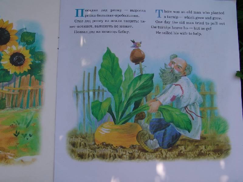 Иллюстрация 1 из 2 для Репка (The Turnip)   Лабиринт - книги. Источник: Лаванда