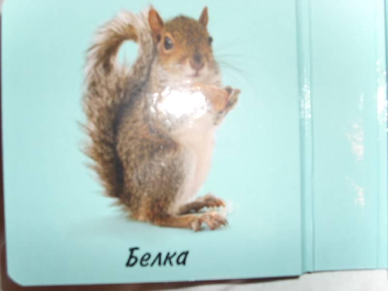 Иллюстрация 1 из 13 для Первые слова. Животные. Книжки-раскладушки   Лабиринт - книги. Источник: Мамачитает