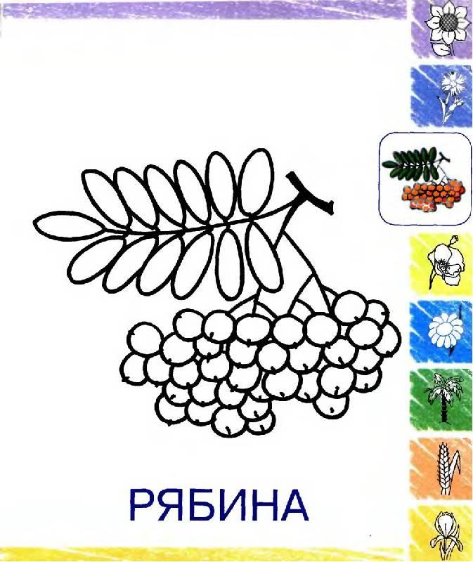 Иллюстрация 1 из 4 для Растения. Раскраска для детей 2-4 лет | Лабиринт - книги. Источник: Лана
