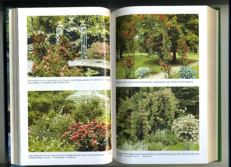Иллюстрация 1 из 3 для Розы в саду и в доме - В. Линь | Лабиринт - книги. Источник: Варвара
