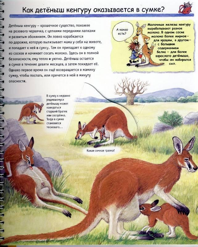 Иллюстрация 1 из 4 для Животные и их детеныши - Дорис Рюбель | Лабиринт - книги. Источник: *  Татьяна *