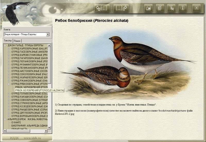 Иллюстрация 1 из 6 для Энциклопедия: Птицы Европы (CDpc) | Лабиринт - софт. Источник: Юлия7