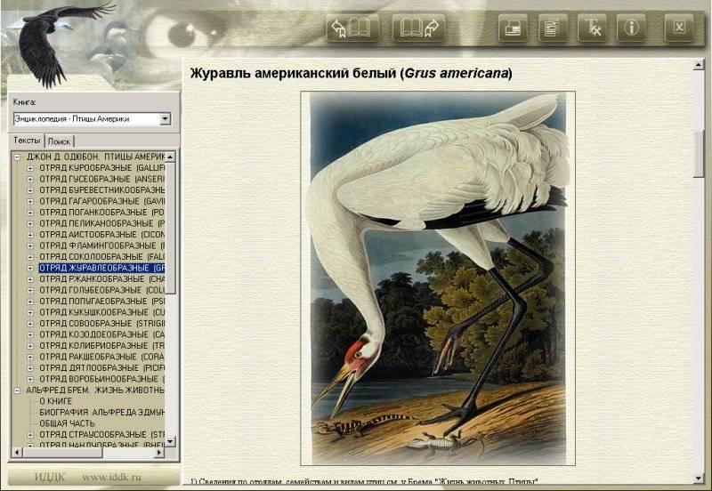 Иллюстрация 1 из 6 для Энциклопедия: Птицы Америки (CDpc) | Лабиринт - софт. Источник: Юлия7