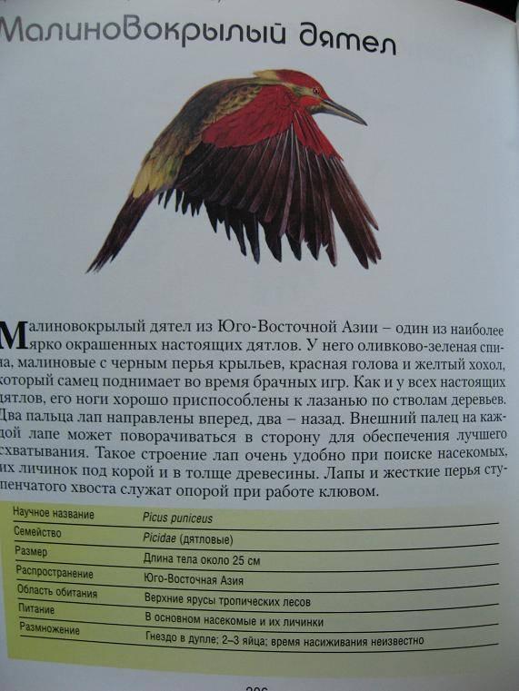 Иллюстрация 1 из 5 для Птицы. Все, что вы хотели знать - Майкл Райт | Лабиринт - книги. Источник: Krofa
