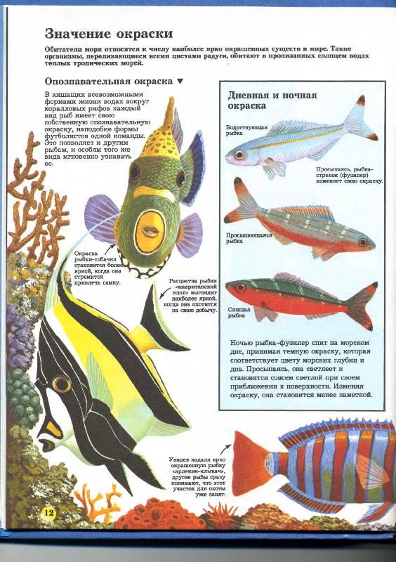 Иллюстрация 1 из 6 для Тайны живой природы   Лабиринт - книги. Источник: РИВА