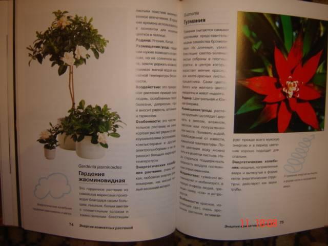 Иллюстрация 1 из 10 для Энергия комнатных растений - Ева-Катарина Хоффманн | Лабиринт - книги. Источник: Leyla