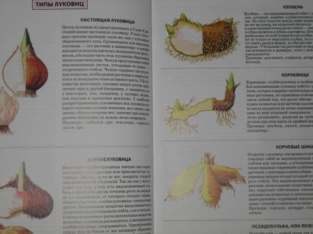 Иллюстрация 1 из 32 для Все о луковичных растениях - Дэвид Хессайон | Лабиринт - книги. Источник: МЕГ