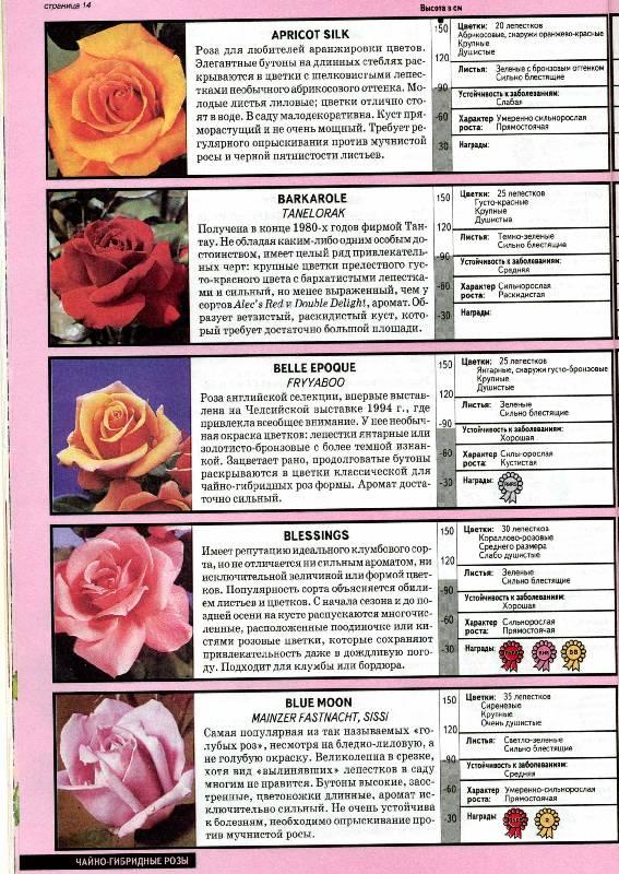 Мелкий роз очень много правда книга у
