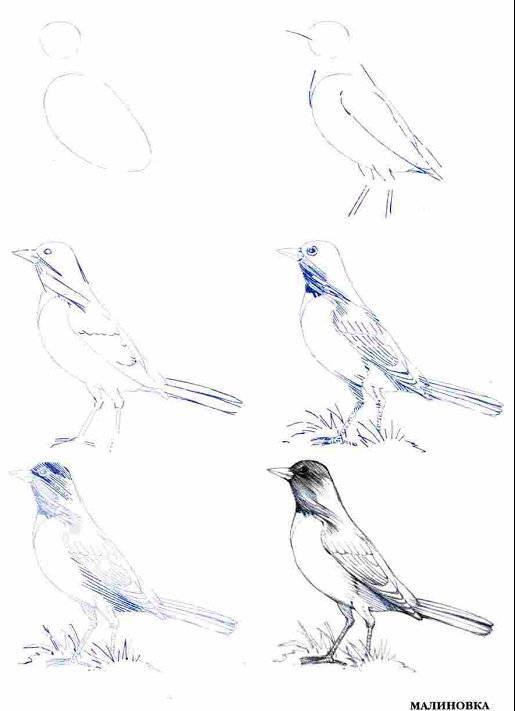 Рисуем диких птиц