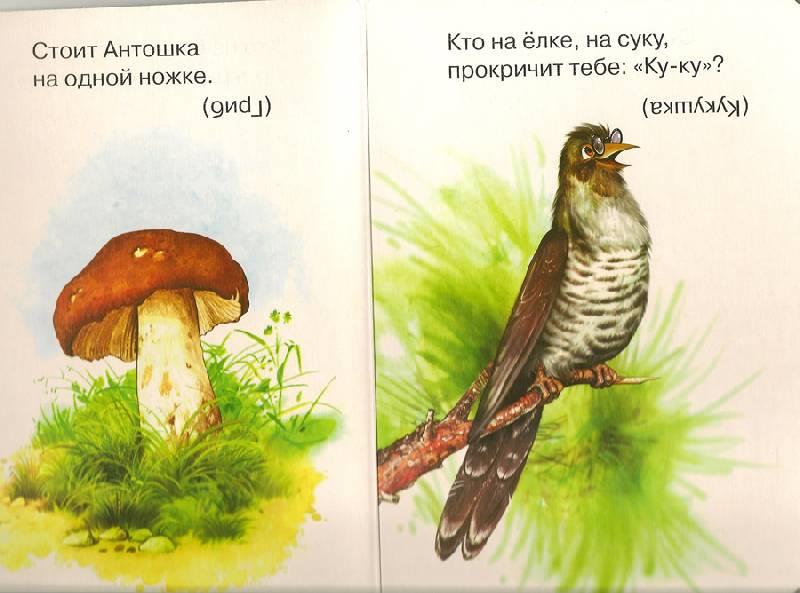Иллюстрация 1 из 2 для Лесные загадки - Владимир Даль | Лабиринт - книги. Источник: farnor