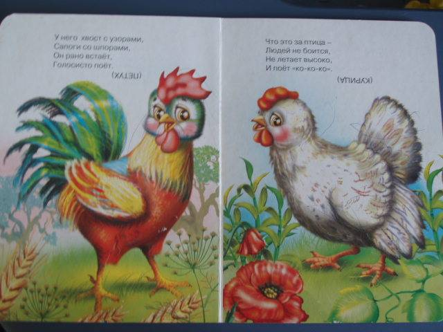 Иллюстрация 1 из 3 для Загадки с картинками. Домашние птицы | Лабиринт - книги. Источник: Витаминка