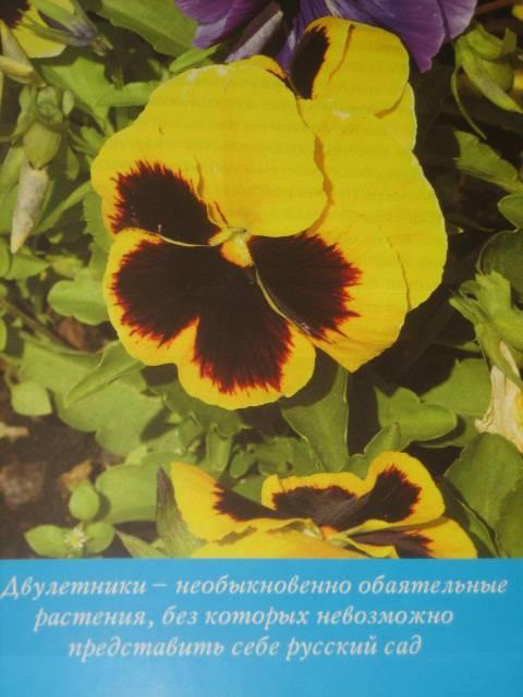 Иллюстрация 1 из 14 для Двулетники - Елена Колесникова   Лабиринт - книги. Источник: МЕГ