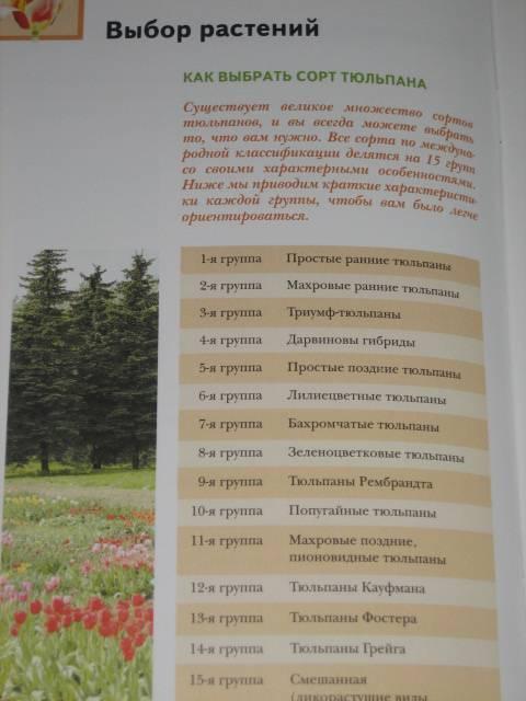 Иллюстрация 1 из 6 для Уход за тюльпанами - Нина Данилина | Лабиринт - книги. Источник: МЕГ