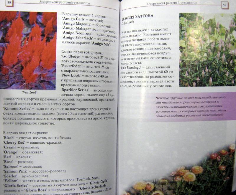 Иллюстрация 1 из 3 для Сухоцветы - Елена Колесникова | Лабиринт - книги. Источник: Спанч Боб