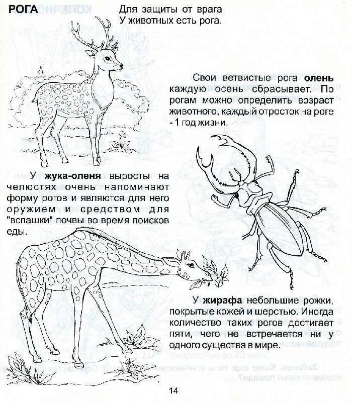 Иллюстрация 1 из 3 для Мир животных. Для детей 5-7 лет (939)   Лабиринт - книги. Источник: РИВА