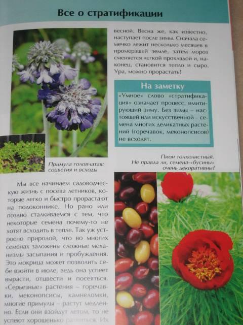 Иллюстрация 1 из 11 для Все цветы из семян - легко и просто - Ольга Бондарева | Лабиринт - книги. Источник: МЕГ