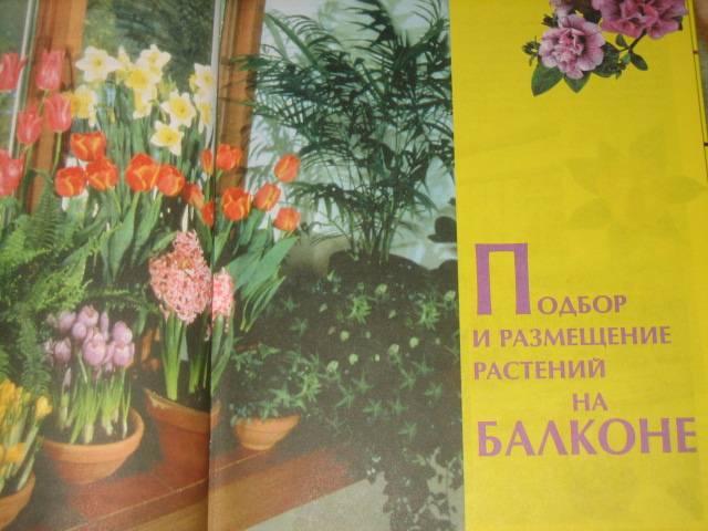 Иллюстрация 1 из 12 для Цветы для балкона, или 1000 растений для вашего балкона: Иллюстрированный справочник - Зыкова, Клименко | Лабиринт - книги. Источник: МЕГ