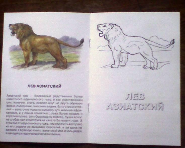 Иллюстрация 1 из 2 для Сыч мохноногий. Животный мир Азии | Лабиринт - книги. Источник: Бривух