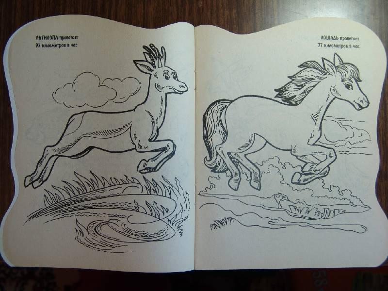 Иллюстрация 1 из 3 для Кто быстрее всех? | Лабиринт - книги. Источник: Лаванда