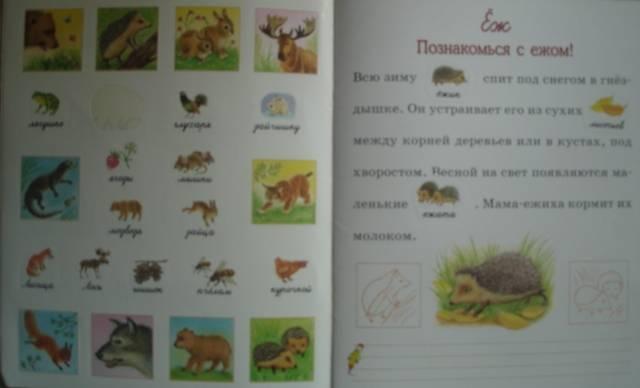 Иллюстрация 1 из 8 для Животный мир - О. Александрова   Лабиринт - книги. Источник: Настёна