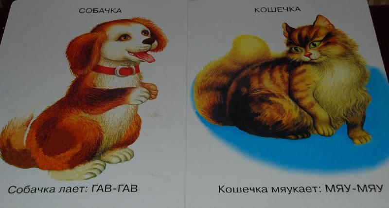 Иллюстрация 1 из 3 для Кто это? - Игорь Антропов   Лабиринт - книги. Источник: Lared