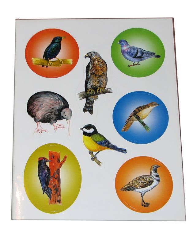 Иллюстрация 1 из 2 для В мире птиц - Юрий Гурин | Лабиринт - книги. Источник: *Мария*