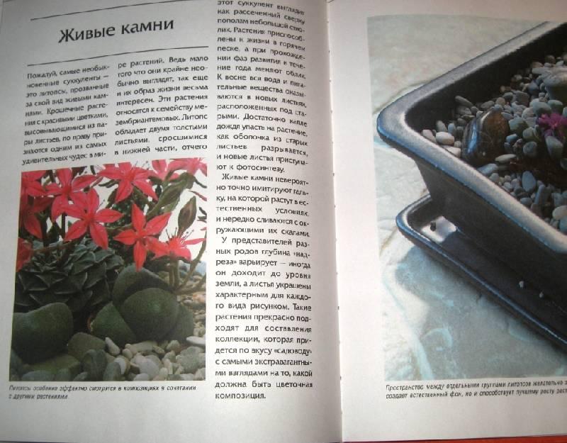 Иллюстрация 1 из 3 для Суккуленты в доме - Наталья Филлипович   Лабиринт - книги. Источник: Zhanna