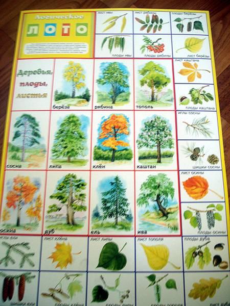 Иллюстрация 1 из 8 для Лото логическое: Деревья, плоды, листья (350х500) | Лабиринт - игрушки. Источник: Galia