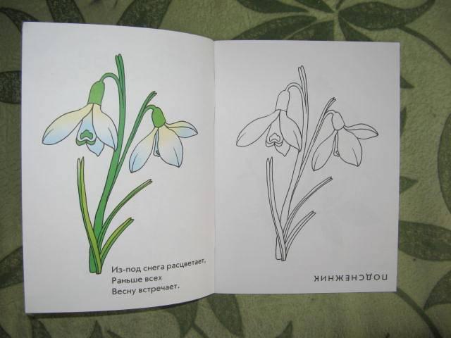 Иллюстрация 1 из 3 для Душистый букет. Раскраска для детей 4-5 лет | Лабиринт - книги. Источник: libe