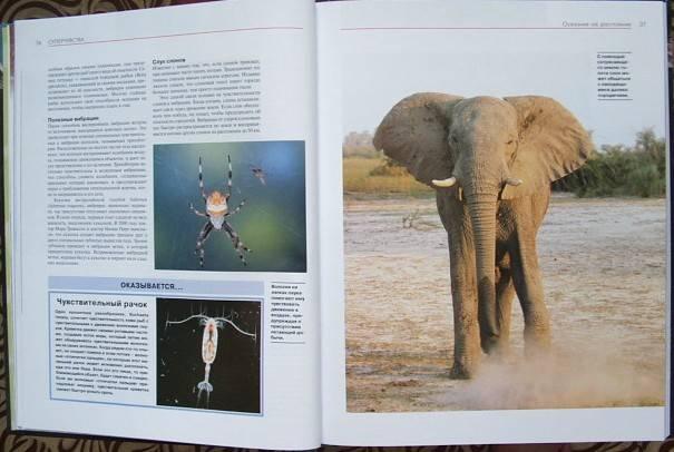 Иллюстрация 1 из 5 для Удивительные способности животных - Карл Шукер | Лабиринт - книги. Источник: Мешкова Юлия Алексеевна