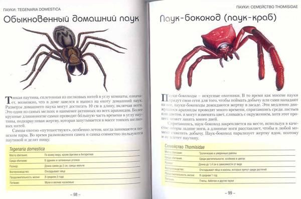 Иллюстрация 1 из 2 для Маленькие монстры: ящерицы, змеи, жуки, пауки - Паула Хаммонд | Лабиринт - книги. Источник: SvetaSan