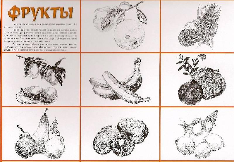 Иллюстрация 1 из 13 для Лото: Фрукты 774 (350х500) | Лабиринт - игрушки. Источник: khab