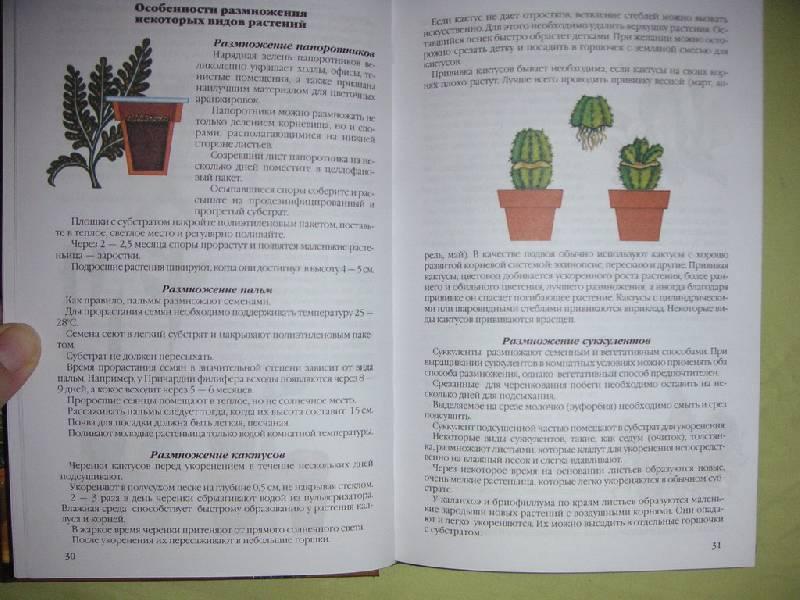 Иллюстрация 1 из 4 для Комнатные растения: Практическое руководство по уходу - Валентин Воронцов | Лабиринт - книги. Источник: kisska