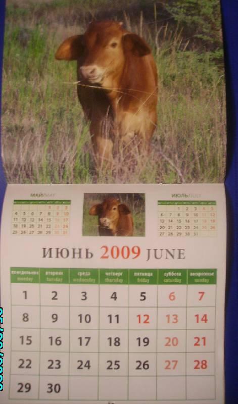 Иллюстрация 1 из 2 для Календарь 2009 Год замечательного быка (30807) | Лабиринт - сувениры. Источник: Rainbow