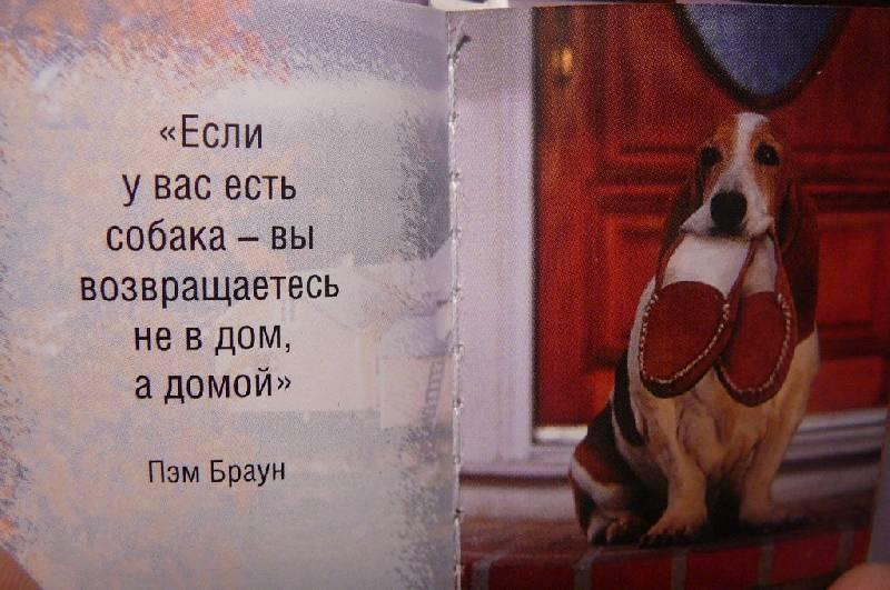 статус про собачий сон погода