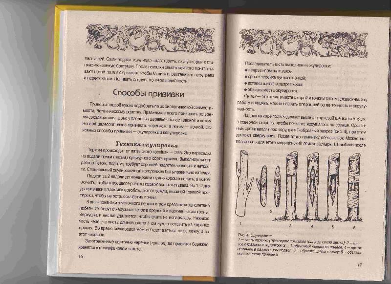 Иллюстрация 1 из 2 для Чудо-сад - Нина Быковская | Лабиринт - книги. Источник: Урядова  Анна Владимировна