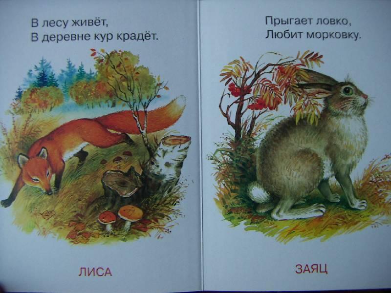 Иллюстрация 1 из 2 для Мы в лесу живем. Народные загадки | Лабиринт - книги. Источник: Алонсо Кихано