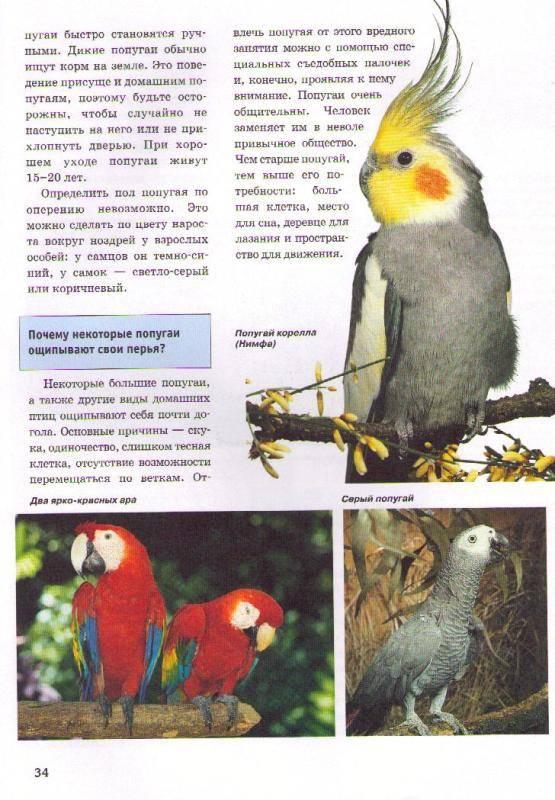 Иллюстрация 1 из 3 для Домашние животные - Хайнц Зильманн | Лабиринт - книги. Источник: In@