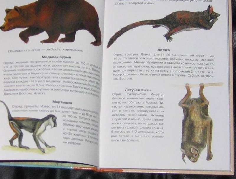 Иллюстрация 1 из 32 для Млекопитающие. Школьный путеводитель - Марк Махлин | Лабиринт - книги. Источник: Кira