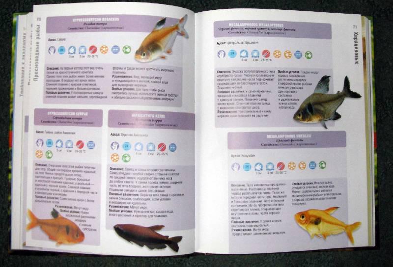 Иллюстрация 1 из 3 для Справочник по аквариумным рыбам. Руководство по содержанию и уходу - Миллс, Ламберт | Лабиринт - книги. Источник: Катерина