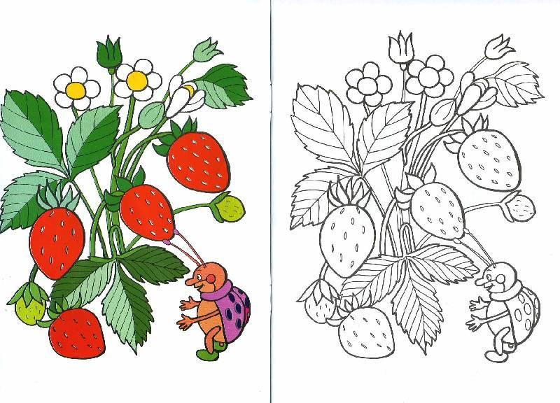 Раскраска картинок овощей и фруктов