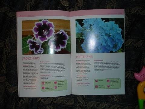 Иллюстрация 1 из 2 для Цветущие комнатные растения - Елена Ермолаева | Лабиринт - книги. Источник: Lutik_sun