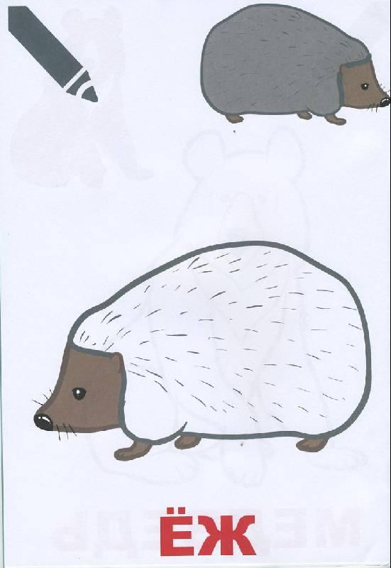 Иллюстрация 1 из 7 для Маленький художник. Выпуск 6. Лесные звери | Лабиринт - книги. Источник: Pallada