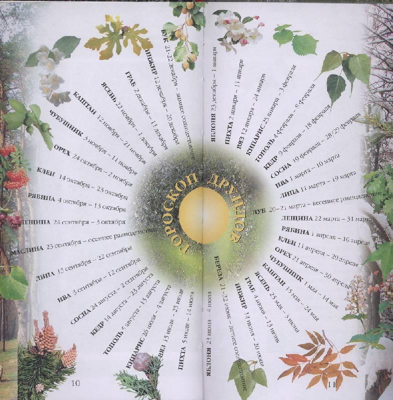 Иллюстрация 1 из 7 для Растения, которые изменят вашу жизнь. Кельтский гороскоп: Тайны друидов - Джулия Крейсс | Лабиринт - книги. Источник: novela08