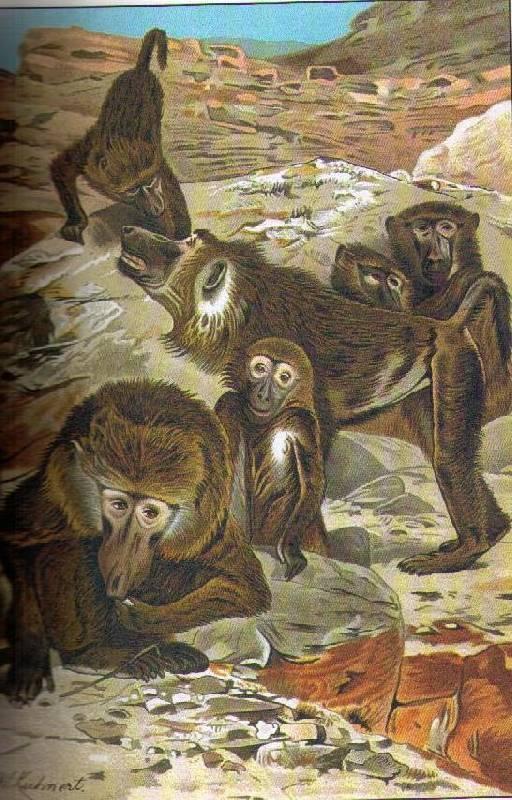Иллюстрация 1 из 8 для Жизнь животных. - Альфред Брем | Лабиринт - книги. Источник: In@
